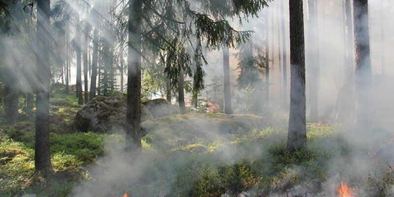 Early Warning System Kebakaran Hutan